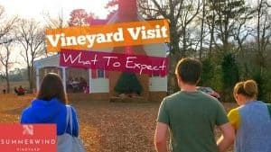 Winery Visit [What To Expect] – Summerwind Vineyards Tour and Wine Tasting