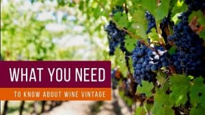 WINE VINTAGE EXPLAINED – What Makes a Good Year For Wine
